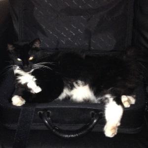 The Studio Cat